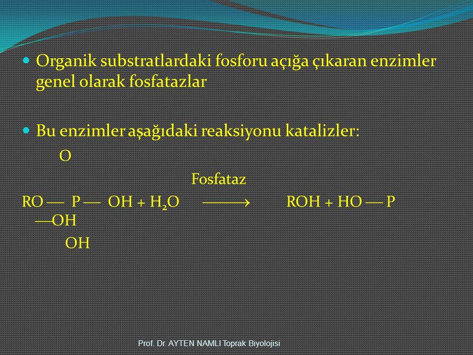 Organik substratlardaki fosforu açığa çıkaran enzimler genel olarak fosfatazlar Bu enzimler aşağıdaki reaksiyonu katalizler: O Fosfataz RO  P  OH + H 2 O  ROH + HO  P  OH OH Prof.