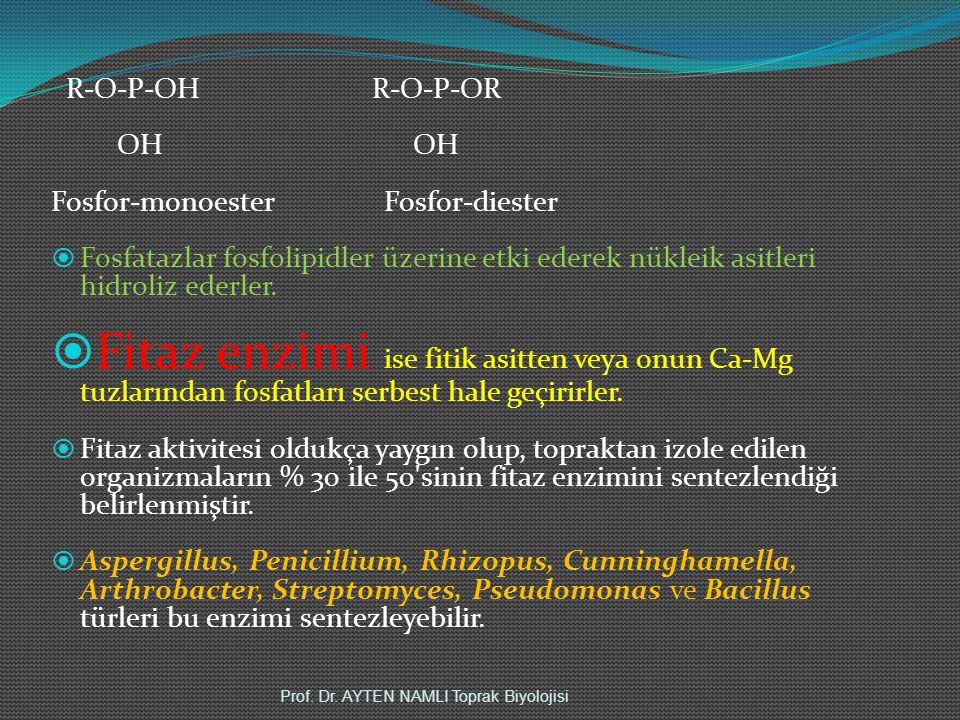 R-O-P-OH R-O-P-OR OH OH Fosfor-monoester Fosfor-diester  Fosfatazlar fosfolipidler üzerine etki ederek nükleik asitleri hidroliz ederler.  Fitaz enz