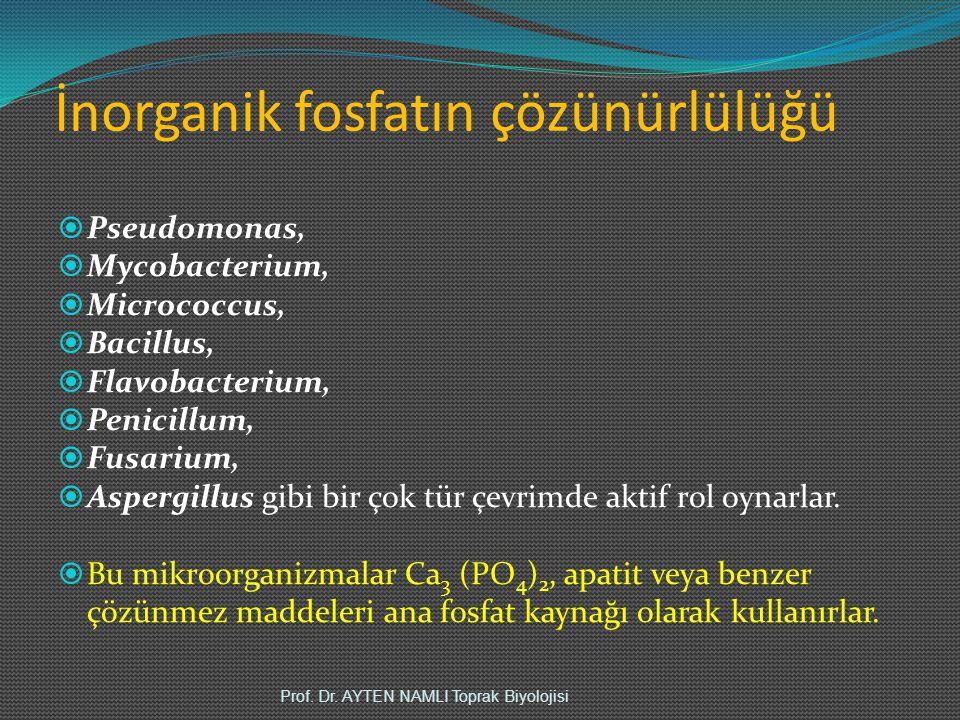 İnorganik fosfatın çözünürlülüğü  Pseudomonas,  Mycobacterium,  Micrococcus,  Bacillus,  Flavobacterium,  Penicillum,  Fusarium,  Aspergillus