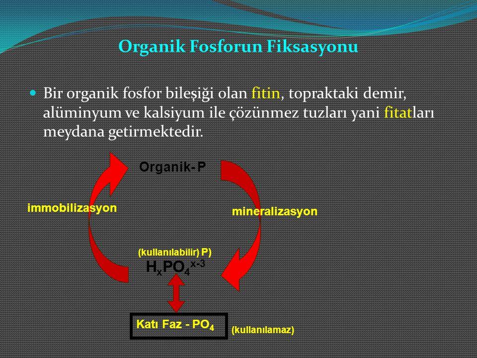 Organik Fosforun Fiksasyonu Bir organik fosfor bileşiği olan fitin, topraktaki demir, alüminyum ve kalsiyum ile çözünmez tuzları yani fitatları meydana getirmektedir.