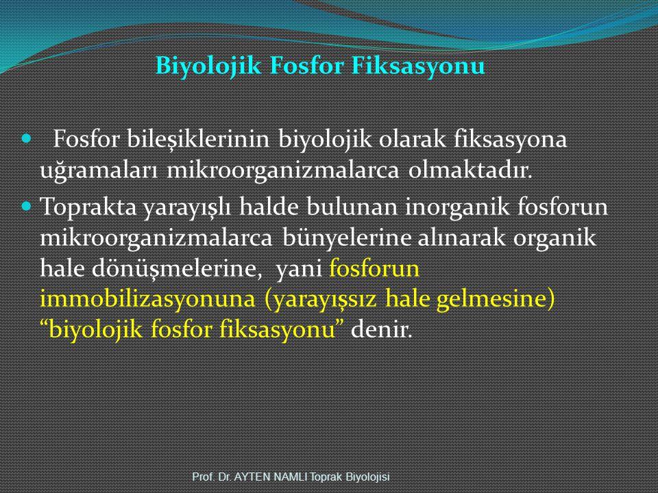 Biyolojik Fosfor Fiksasyonu Fosfor bileşiklerinin biyolojik olarak fiksasyona uğramaları mikroorganizmalarca olmaktadır. Toprakta yarayışlı halde bulu