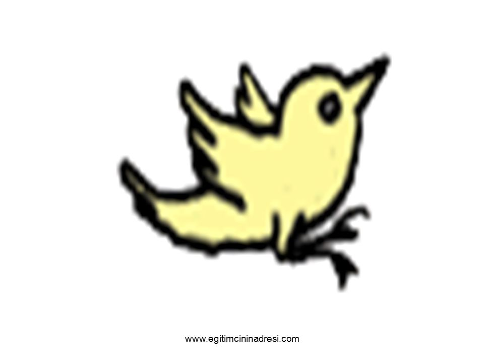 Kuşum uçtu, kuşum gitti. Kuşumu kış kışkışladı!.. www.egitimcininadresi.com