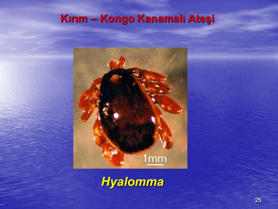 Hyalomma Hyalomma KKKA'nın bulaşmasında Hyalomma soyuna ait keneler daha büyük bir yere sahip olmakla birlikte, 30 kene türünün bu hastalığı bulaştırabileceği bildirilmektedir.