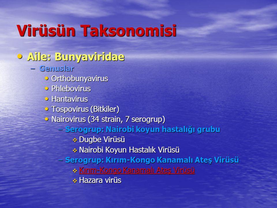 Virüsün Taksonomisi Aile: Bunyaviridae Aile: Bunyaviridae –Genuslar Orthobunyavirus Orthobunyavirus Phlebovirus Phlebovirus Hantavirus Hantavirus Tosp