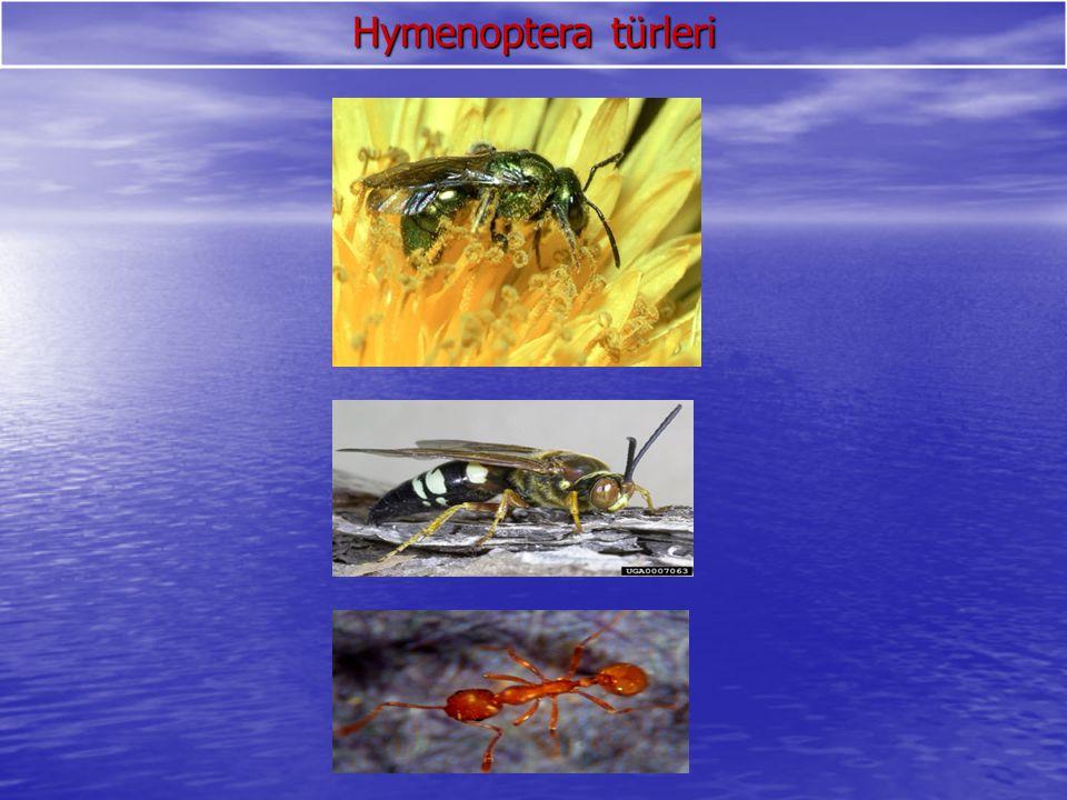 Apidea=Bal arıları Gurup halinde sokarlar Gurup halinde sokarlar Kovan civarında saldırgandır.