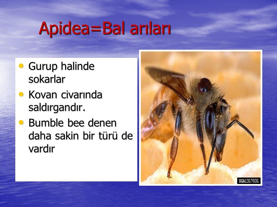 Apidea=Bal arıları Gurup halinde sokarlar Gurup halinde sokarlar Kovan civarında saldırgandır. Kovan civarında saldırgandır. Bumble bee denen daha sak