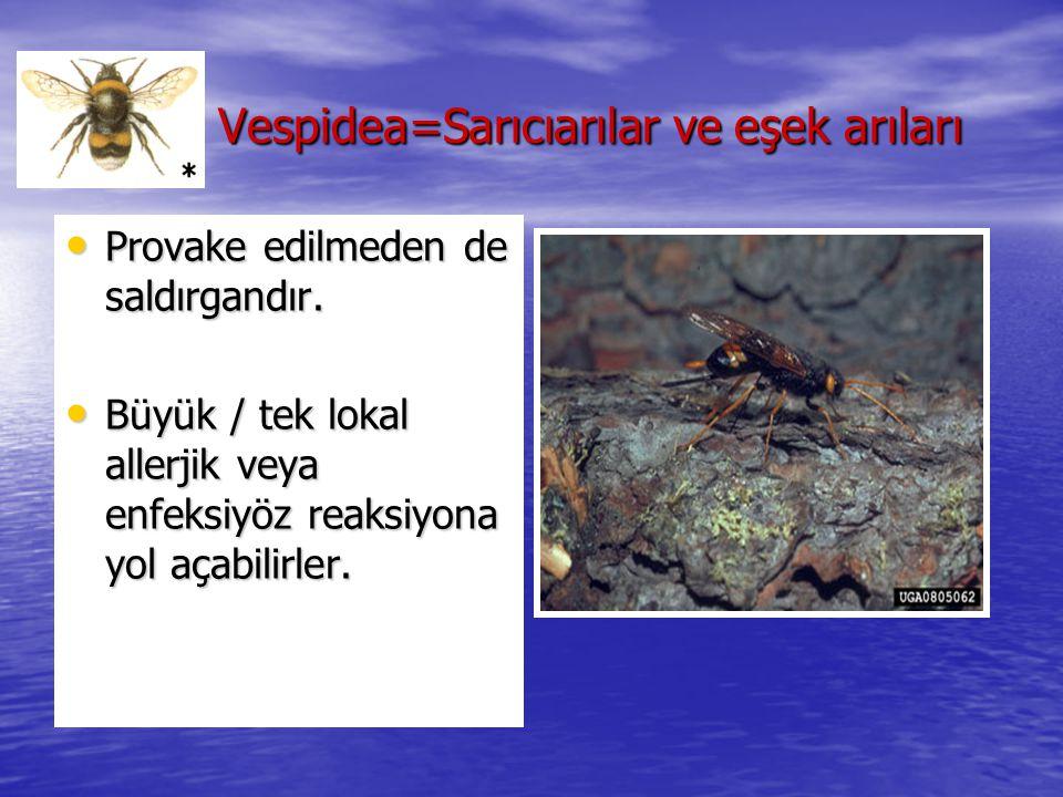 Vespidea=Sarıcıarılar ve eşek arıları Vespidea=Sarıcıarılar ve eşek arıları Provake edilmeden de saldırgandır. Provake edilmeden de saldırgandır. Büyü