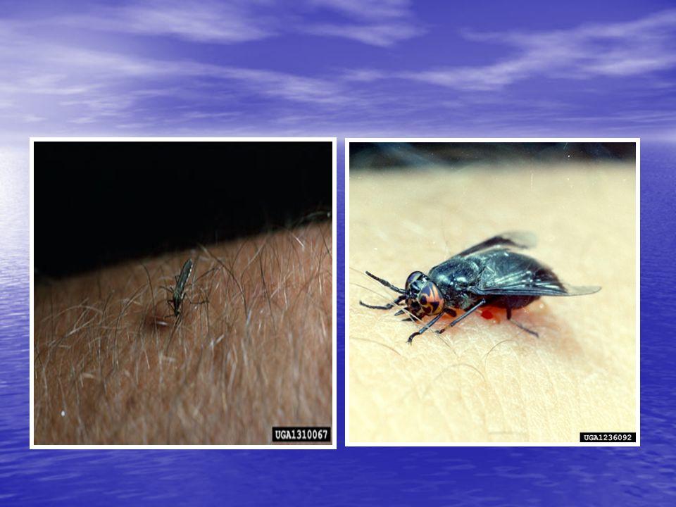 Inhalan Böcek Allerjileri 1- Mevsimsel evdışı allerjen böcekler –Caddisflies –Midges –Lake flies 2- Perennial ev içi allerjen böcekler - Hamamböceği -Akarlar