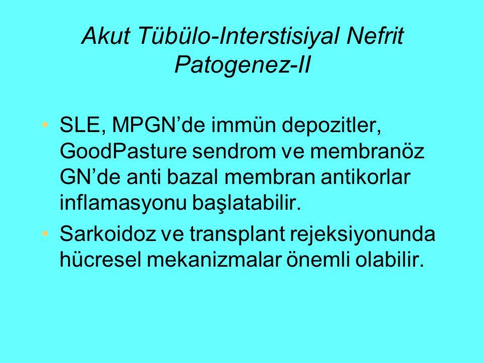 Akut Tübülo-Interstisiyal Nefrit Patogenez-II SLE, MPGN'de immün depozitler, GoodPasture sendrom ve membranöz GN'de anti bazal membran antikorlar infl