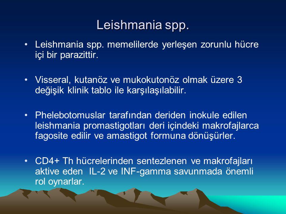 Leishmania spp. Leishmania spp. memelilerde yerleşen zorunlu hücre içi bir parazittir. Visseral, kutanöz ve mukokutonöz olmak üzere 3 değişik klinik t