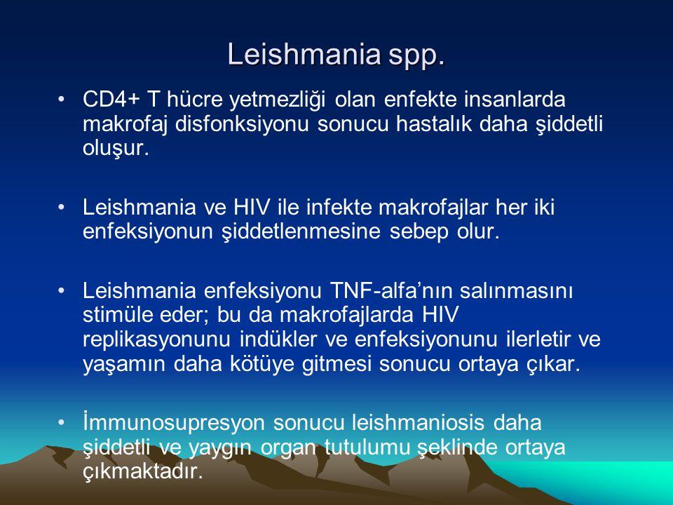 Leishmania spp. CD4+ T hücre yetmezliği olan enfekte insanlarda makrofaj disfonksiyonu sonucu hastalık daha şiddetli oluşur. Leishmania ve HIV ile inf