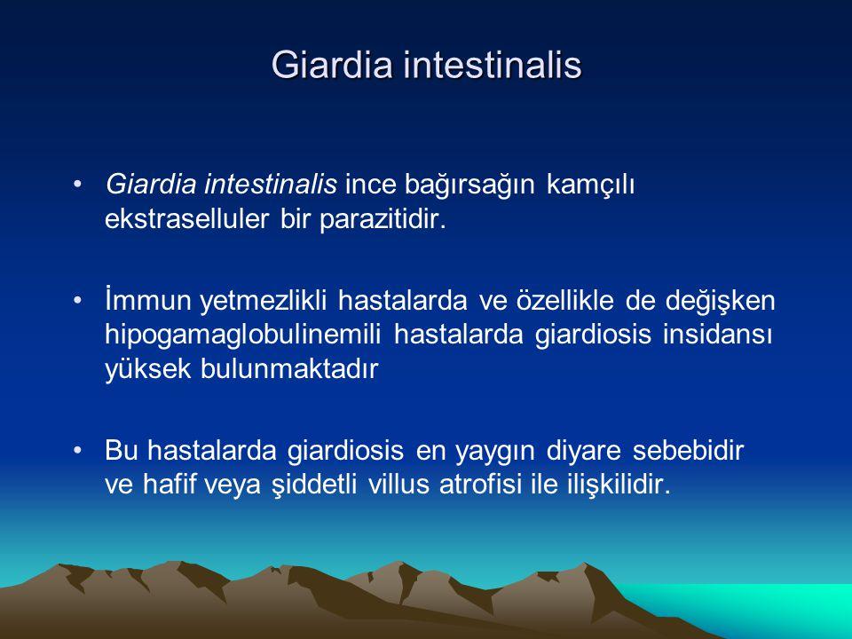 Giardia intestinalis Giardia intestinalis ince bağırsağın kamçılı ekstraselluler bir parazitidir. İmmun yetmezlikli hastalarda ve özellikle de değişke