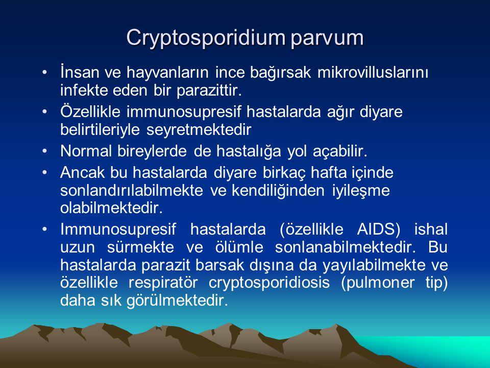 Cryptosporidium parvum İnsan ve hayvanların ince bağırsak mikrovilluslarını infekte eden bir parazittir. Özellikle immunosupresif hastalarda ağır diya