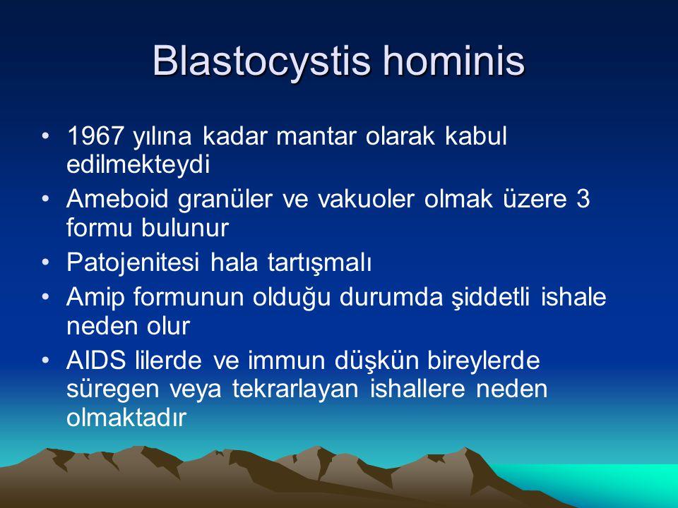 Blastocystis hominis 1967 yılına kadar mantar olarak kabul edilmekteydi Ameboid granüler ve vakuoler olmak üzere 3 formu bulunur Patojenitesi hala tar