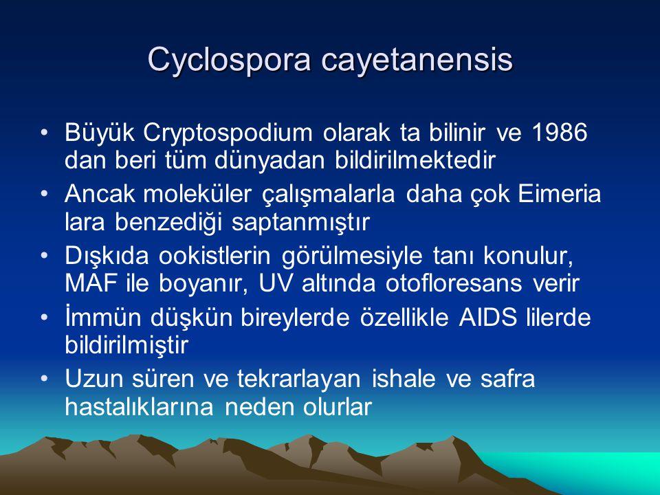 Cyclospora cayetanensis Büyük Cryptospodium olarak ta bilinir ve 1986 dan beri tüm dünyadan bildirilmektedir Ancak moleküler çalışmalarla daha çok Eim