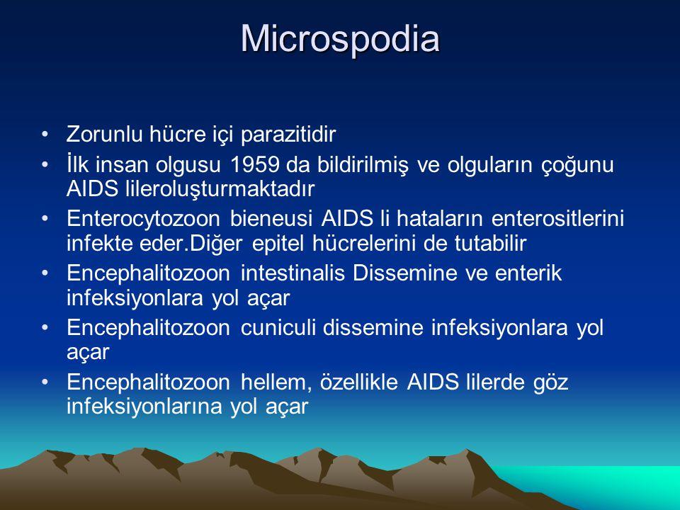 Microspodia Zorunlu hücre içi parazitidir İlk insan olgusu 1959 da bildirilmiş ve olguların çoğunu AIDS lileroluşturmaktadır Enterocytozoon bieneusi A