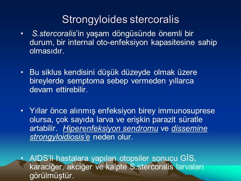 Strongyloides stercoralis S.stercoralis'in yaşam döngüsünde önemli bir durum, bir internal oto-enfeksiyon kapasitesine sahip olmasıdır. Bu siklus kend