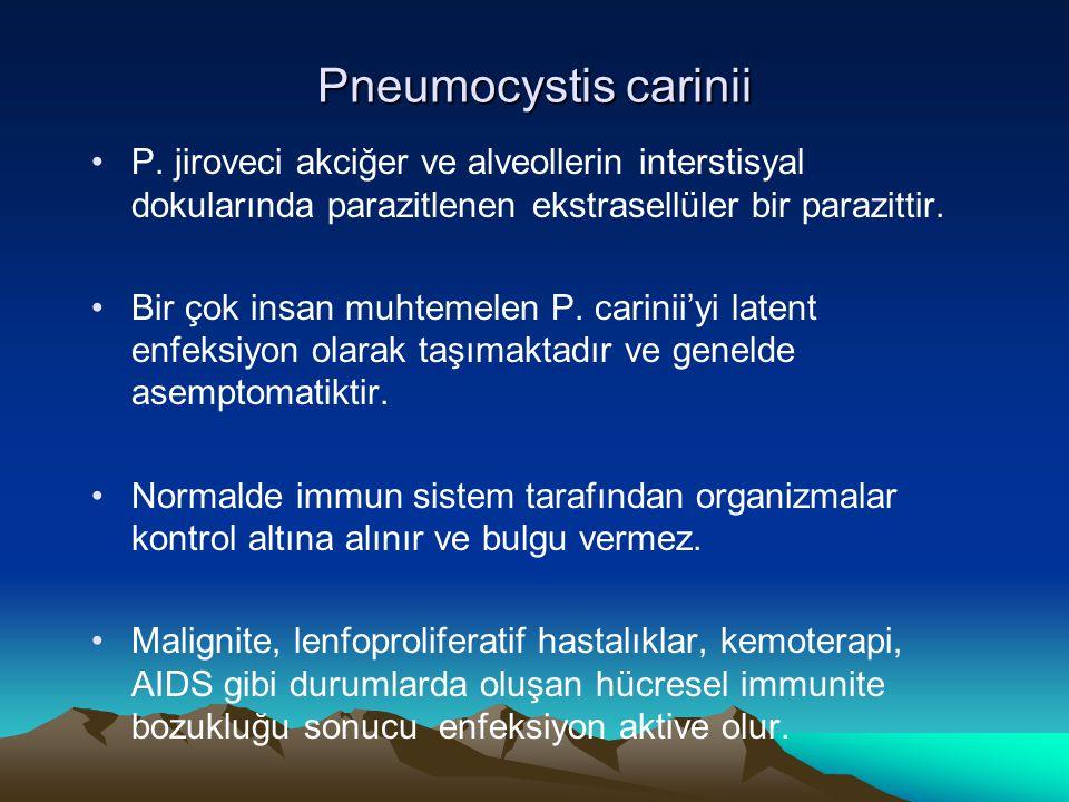 Pneumocystis carinii Pneumocystis carinii İmmunosupresif hastalarda organizmalar akciğerde aşırı derecede çoğalır ve PCP'ye (Pneumocystis carinii pneumonia) sebep olur.