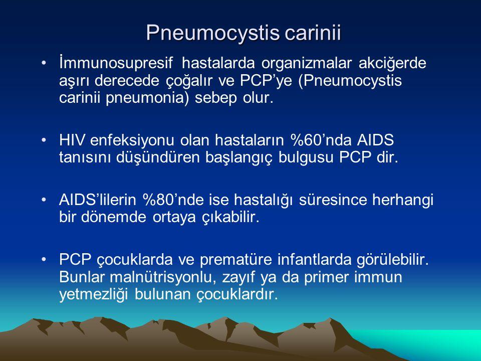 Pneumocystis carinii Pneumocystis carinii İmmunosupresif hastalarda organizmalar akciğerde aşırı derecede çoğalır ve PCP'ye (Pneumocystis carinii pneu