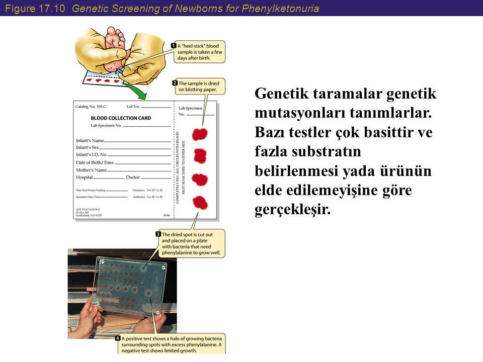 Figure 17.10 Genetic Screening of Newborns for Phenylketonuria Genetik taramalar genetik mutasyonları tanımlarlar. Bazı testler çok basittir ve fazla