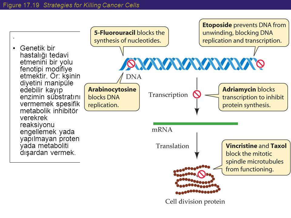 Figure 17.19 Strategies for Killing Cancer Cells. Genetik bir hastalığı tedavi etmenini bir yolu fenotipi modifiye etmektir. Ör: kşinin diyetini manip