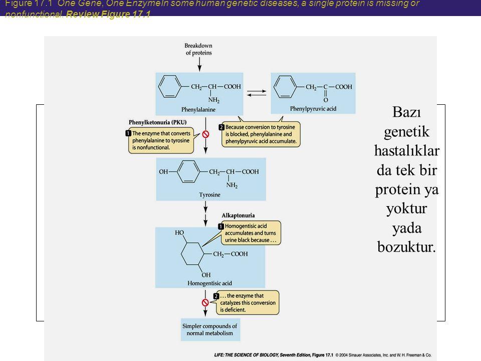 2.yaklaşım: ALLELE-SPECIFIC OLIGONUCLEOTIDE HYBRIDIZATION Belirli nokta mutasyonları belirlemenin diğer bir yolu da allele-specific oligonucleotide hybridization (ASO) yöntemidir Uygun hibridiazyon koşulları altında sentetik kısa tek zincirli DNA veya RNA probları kullanılır.