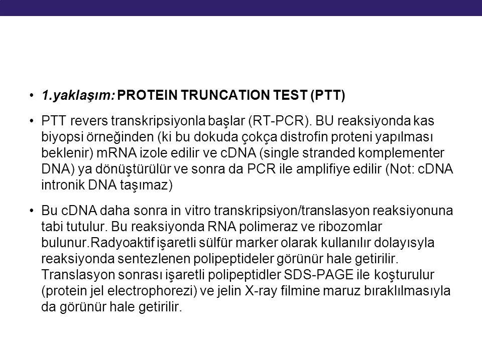 1.yaklaşım: PROTEIN TRUNCATION TEST (PTT) PTT revers transkripsiyonla başlar (RT-PCR). BU reaksiyonda kas biyopsi örneğinden (ki bu dokuda çokça distr