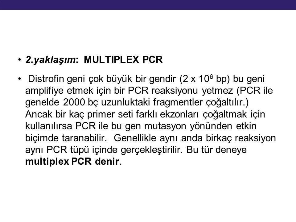 2.yaklaşım: MULTIPLEX PCR Distrofin geni çok büyük bir gendir (2 x 10 6 bp) bu geni amplifiye etmek için bir PCR reaksiyonu yetmez (PCR ile genelde 20