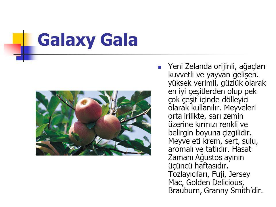 Royal Gala Yeni Zelanda orijinli, çok verimli bir çeşit olup ağaçları kuvvetli ve yayvan gelişir.