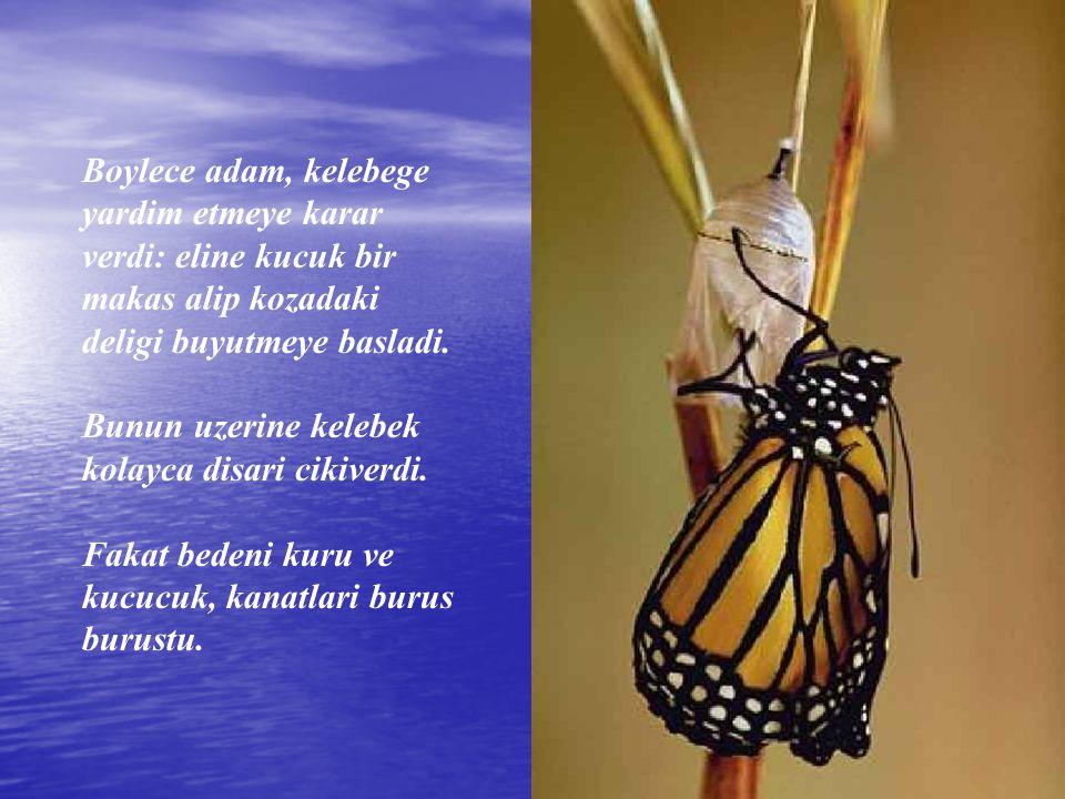 Adam izlemeye devam etti; cunku her an kelebegin kanatlarinin acilip genisleyecegini ve bedenini tasiyacak kadar guclenecegini umuyordu.