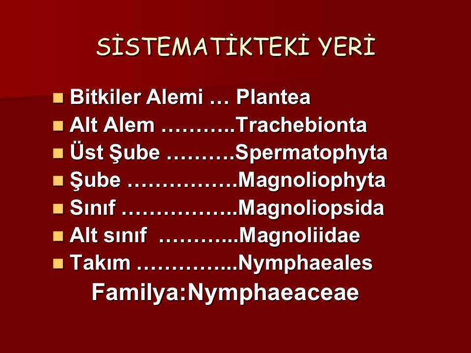 SİSTEMATİKTEKİ YERİ Bitkiler Alemi … Plantea Bitkiler Alemi … Plantea Alt Alem ………..Trachebionta Alt Alem ………..Trachebionta Üst Şube ……….Spermatophyta Üst Şube ……….Spermatophyta Şube …………….Magnoliophyta Şube …………….Magnoliophyta Sınıf ……………..Magnoliopsida Sınıf ……………..Magnoliopsida Alt sınıf ………...Magnoliidae Alt sınıf ………...Magnoliidae Takım …………...Nymphaeales Takım …………...Nymphaeales Familya:Nymphaeaceae Familya:Nymphaeaceae