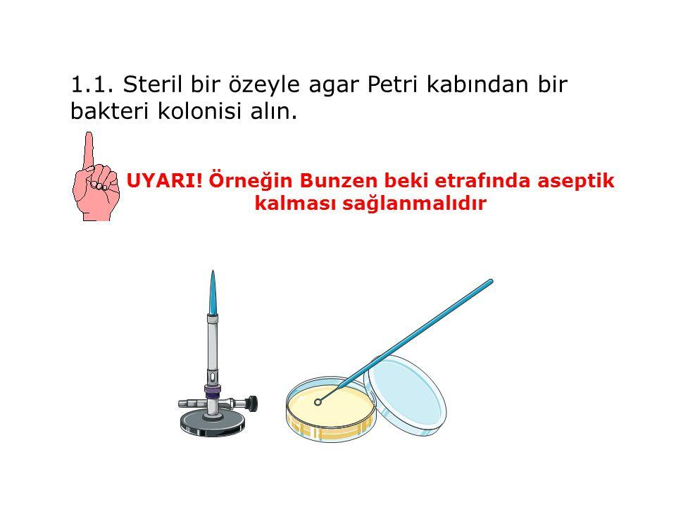 1.1.Steril bir özeyle agar Petri kabından bir bakteri kolonisi alın.