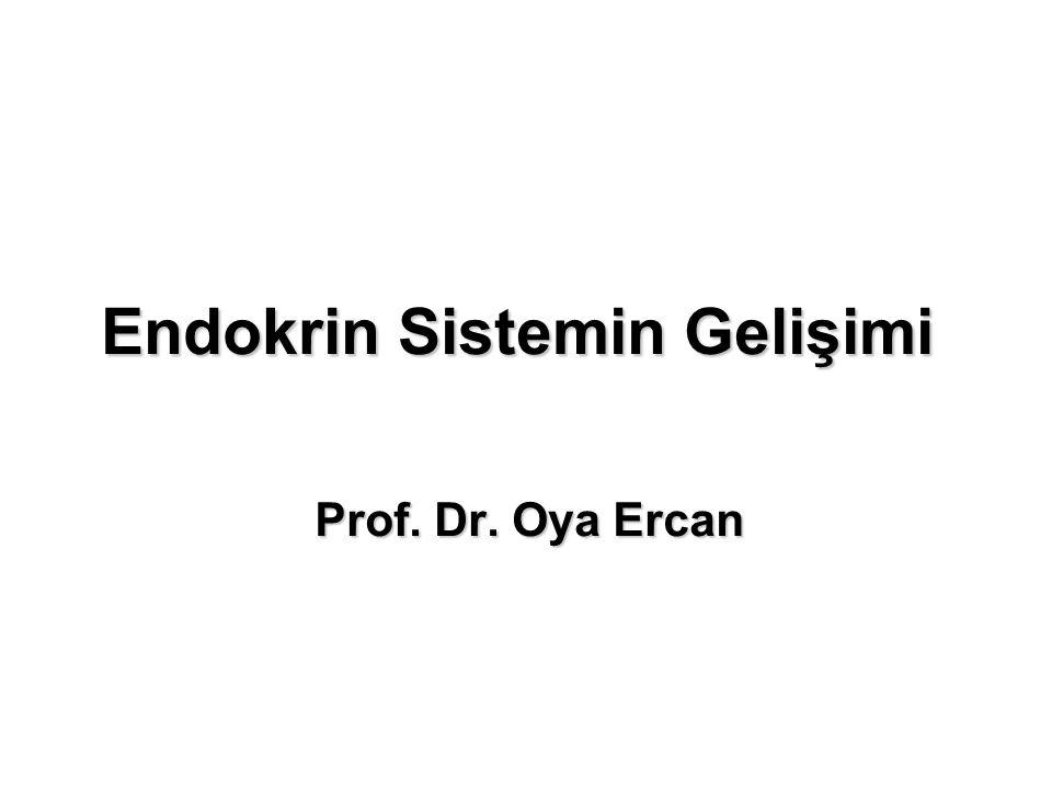 Endokrin Sistemin Gelişimi Prof. Dr. Oya Ercan