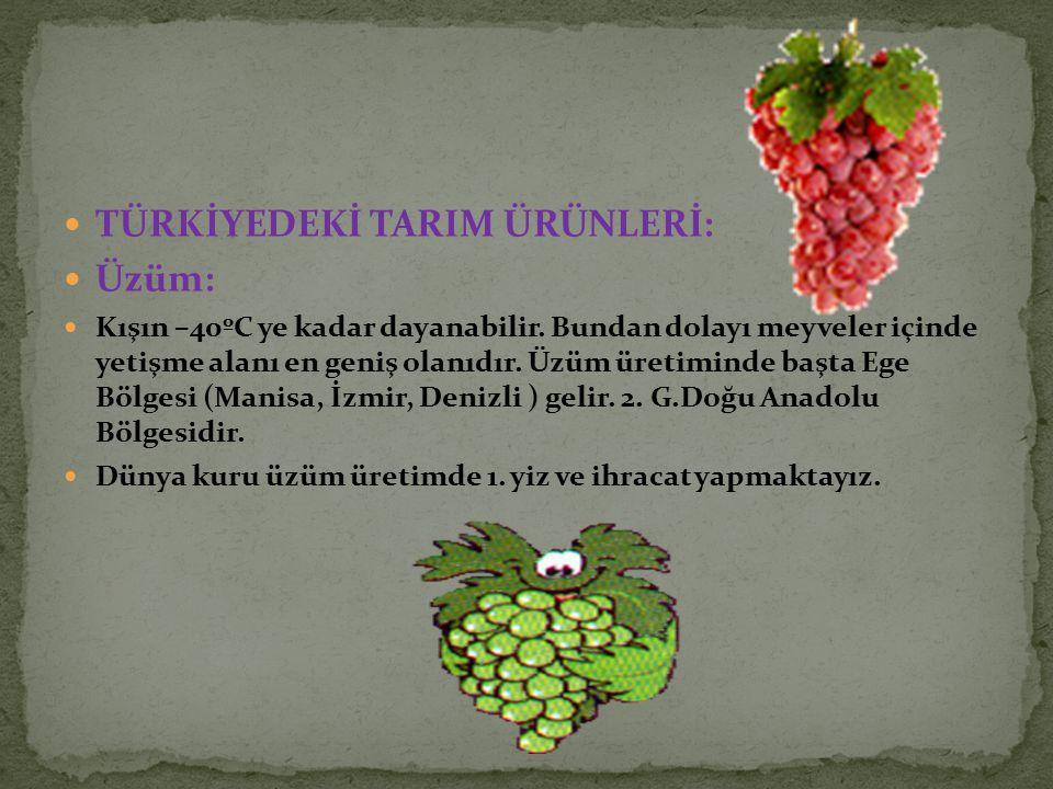 TÜRKİYEDEKİ TARIM ÜRÜNLERİ: Üzüm: Kışın –40ºC ye kadar dayanabilir. Bundan dolayı meyveler içinde yetişme alanı en geniş olanıdır. Üzüm üretiminde baş