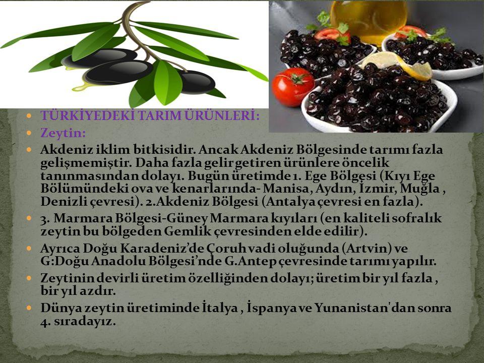 TÜRKİYEDEKİ TARIM ÜRÜNLERİ: Zeytin: Akdeniz iklim bitkisidir. Ancak Akdeniz Bölgesinde tarımı fazla gelişmemiştir. Daha fazla gelir getiren ürünlere ö