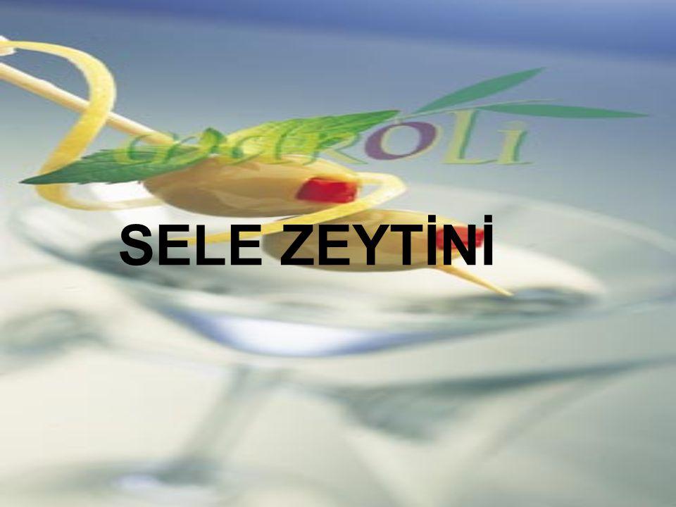 SELE ZEYTİNİ