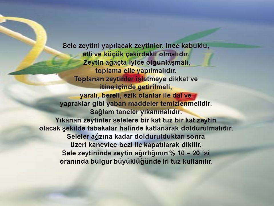 Sele zeytini yapılacak zeytinler, ince kabuklu, etli ve küçük çekirdekli olmalıdır.