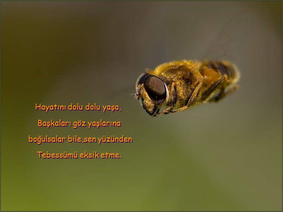 Musique : Aznavour – C'est beau la vie Tercüme:Y.Haznedaroğlu
