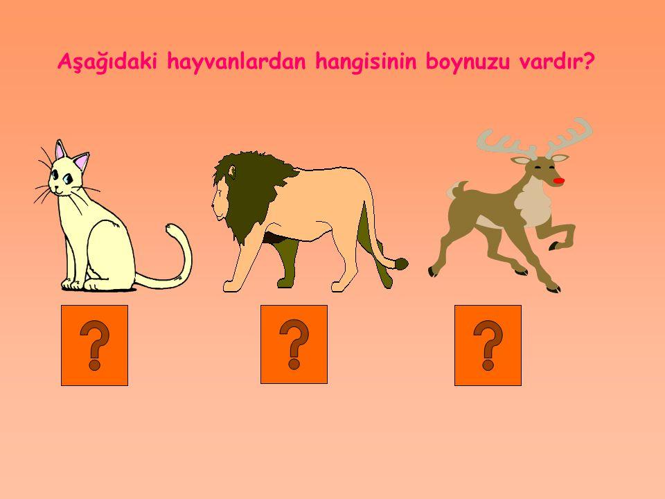 Aşağıdaki hayvanlardan hangisinin boynuzu vardır?