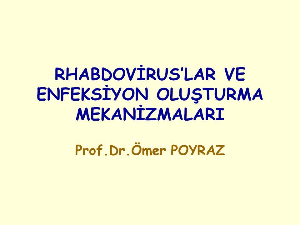 RHABDOVİRUS'LAR VE ENFEKSİYON OLUŞTURMA MEKANİZMALARI Prof.Dr.Ömer POYRAZ
