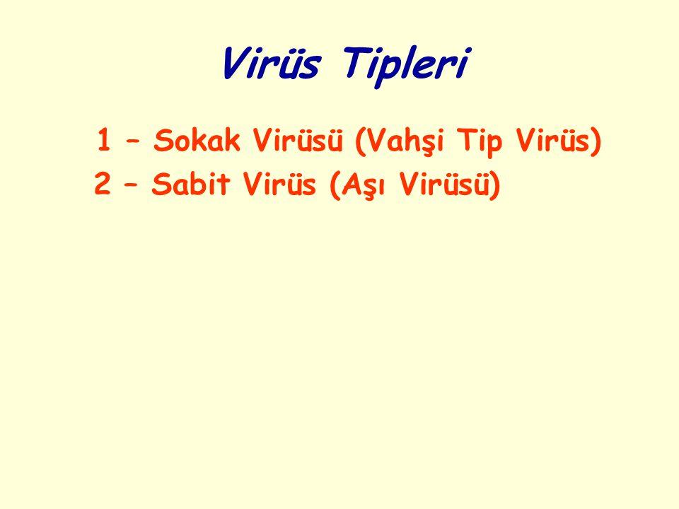 Virüs Tipleri 1 – Sokak Virüsü (Vahşi Tip Virüs) 2 – Sabit Virüs (Aşı Virüsü)