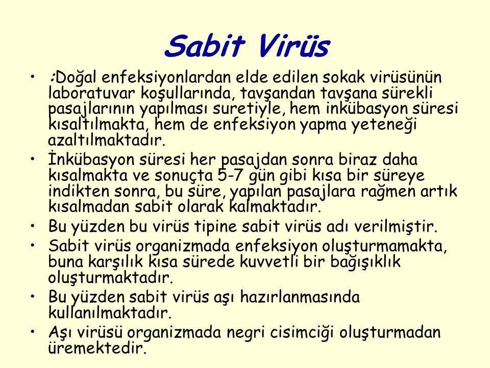 Sabit Virüs :Doğal enfeksiyonlardan elde edilen sokak virüsünün laboratuvar koşullarında, tavşandan tavşana sürekli pasajlarının yapılması suretiyle,