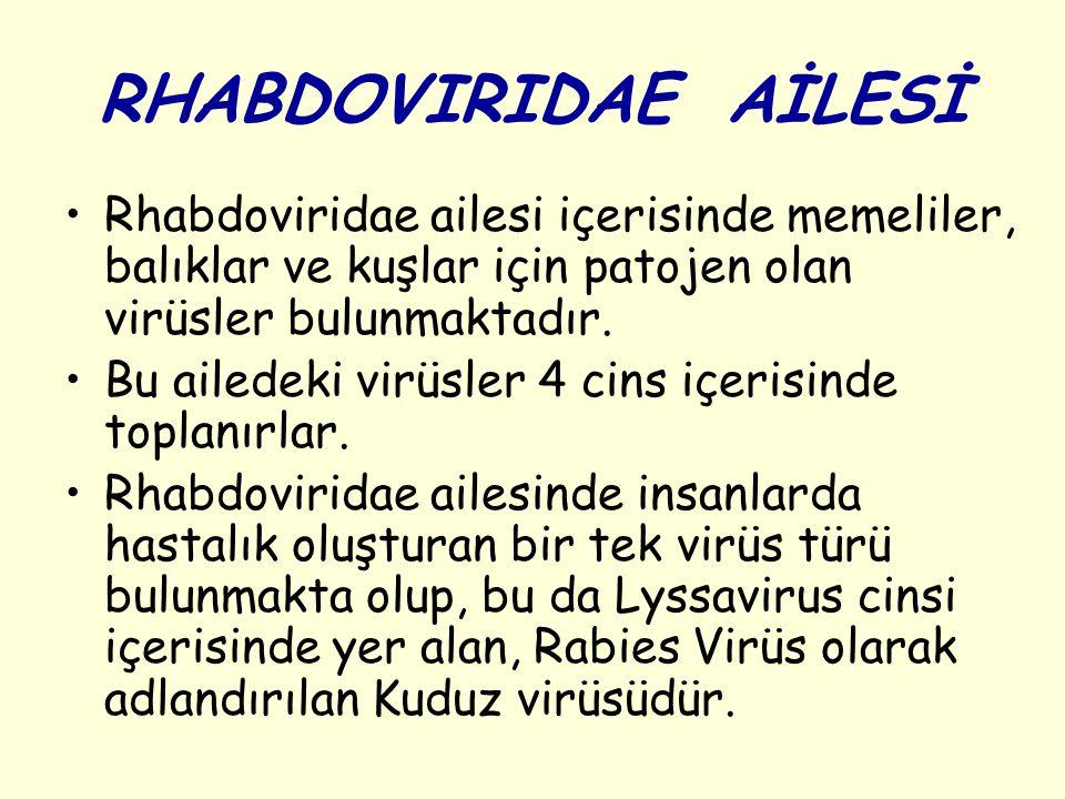 RHABDOVIRIDAE AİLESİ Rhabdoviridae ailesi içerisinde memeliler, balıklar ve kuşlar için patojen olan virüsler bulunmaktadır. Bu ailedeki virüsler 4 ci