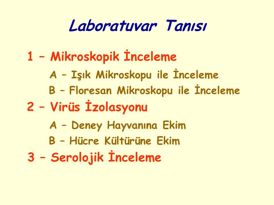Laboratuvar Tanısı 1 – Mikroskopik İnceleme A – Işık Mikroskopu ile İnceleme B – Floresan Mikroskopu ile İnceleme 2 – Virüs İzolasyonu A – Deney Hayva