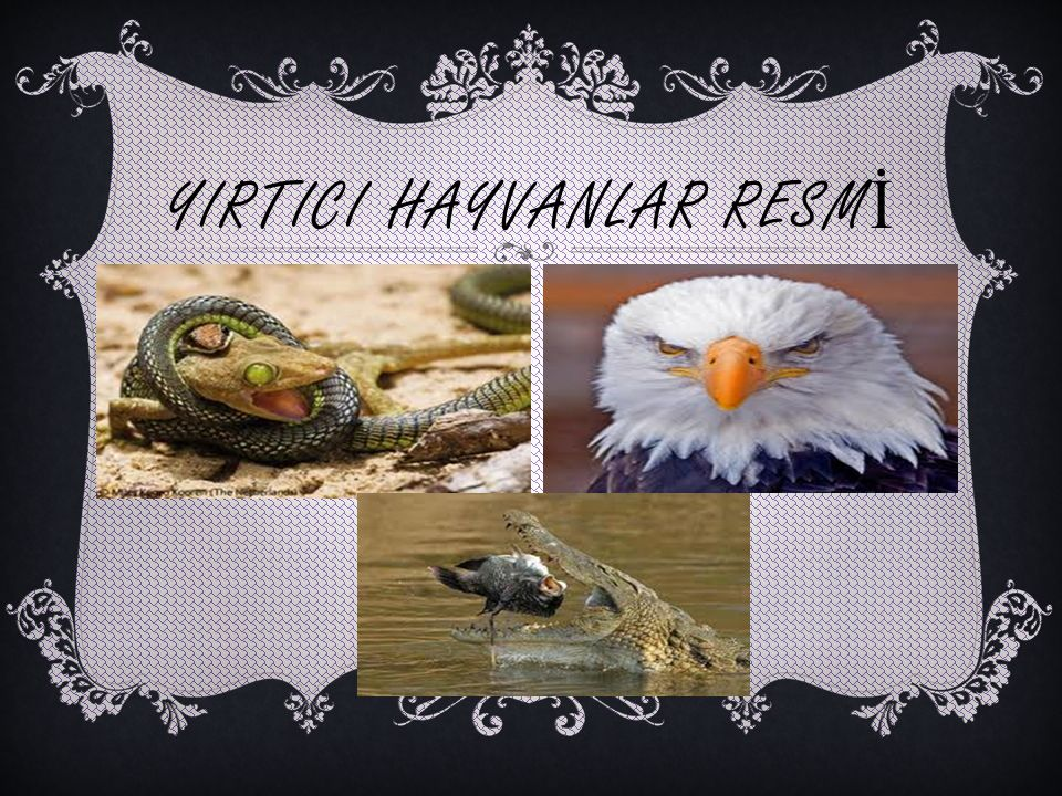YIRTICI HAYVANLAR RESM İ