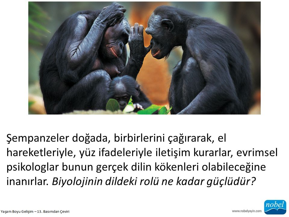 Şempanzeler doğada, birbirlerini çağırarak, el hareketleriyle, yüz ifadeleriyle iletişim kurarlar, evrimsel psikologlar bunun gerçek dilin kökenleri o
