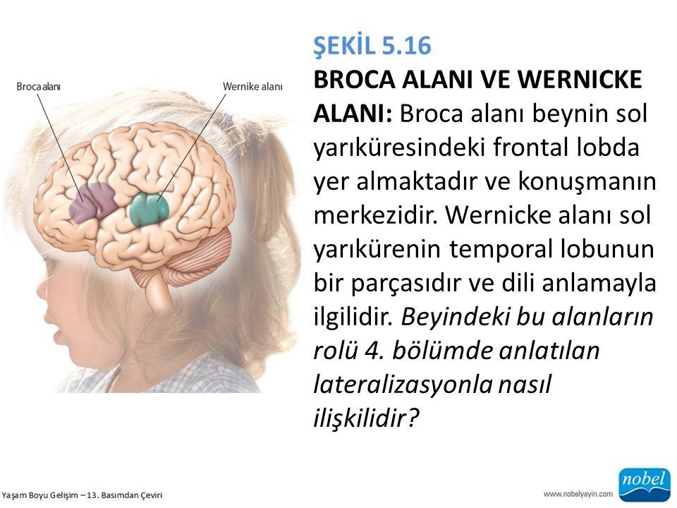 ŞEKİL 5.16 BROCA ALANI VE WERNICKE ALANI: Broca alanı beynin sol yarıküresindeki frontal lobda yer almaktadır ve konuşmanın merkezidir. Wernicke alanı