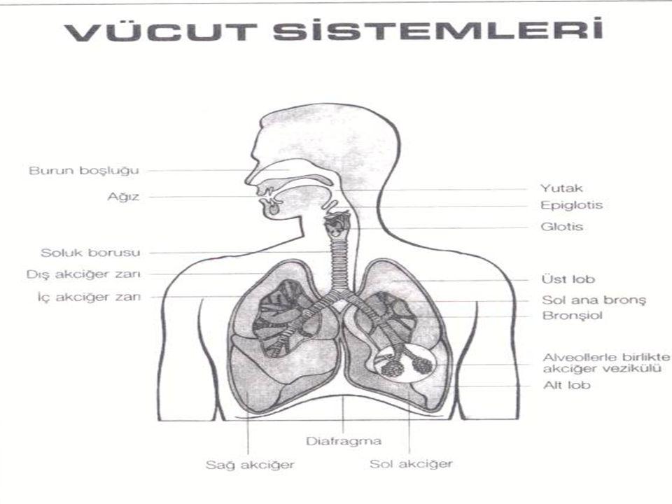TANI: Göğüs grafisi çekilerek konur.Plevra sıvısı Torasentez yapılarak alınır.İncelenir.