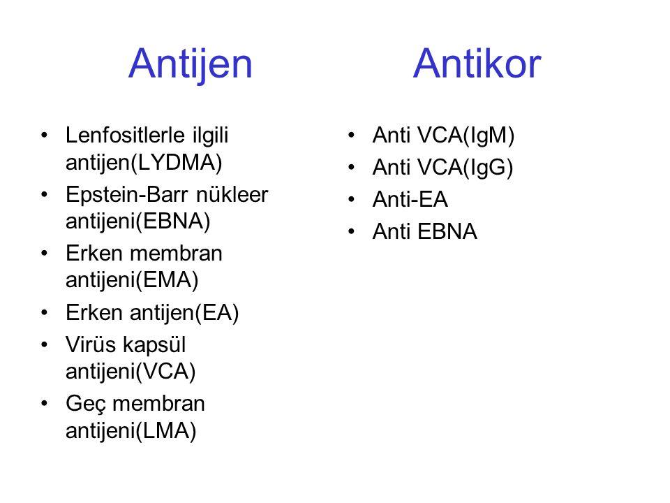 Antijen Antikor Lenfositlerle ilgili antijen(LYDMA) Epstein-Barr nükleer antijeni(EBNA) Erken membran antijeni(EMA) Erken antijen(EA) Virüs kapsül ant
