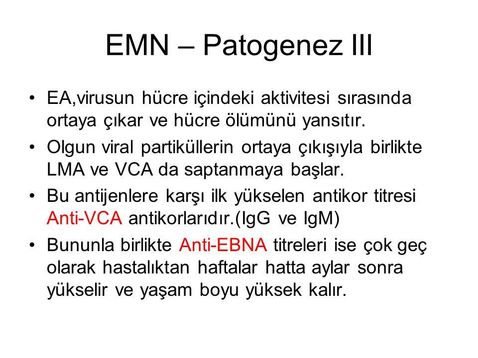 EMN – Patogenez III EA,virusun hücre içindeki aktivitesi sırasında ortaya çıkar ve hücre ölümünü yansıtır. Olgun viral partiküllerin ortaya çıkışıyla